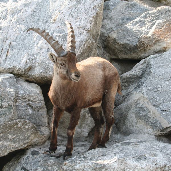 More than 2,000 different animals from 150 species of the European Alpine region
