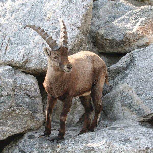 Bekijk meer dan 2000 verschillende dieren van 150 diersoorten uit de Europese Alpen.